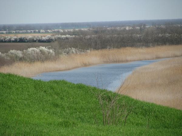 Извилистая река Ея