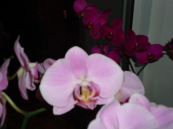 Мои комнатные орхидеи