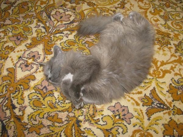 Вот так спит в самом центре комнаты, а мы ее вынуждены обходить)