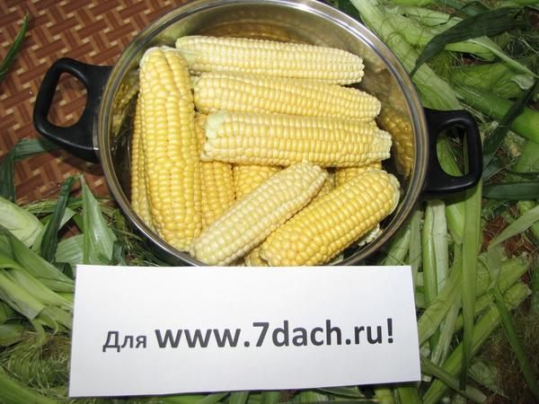Варим кукурузу 09.06.13!
