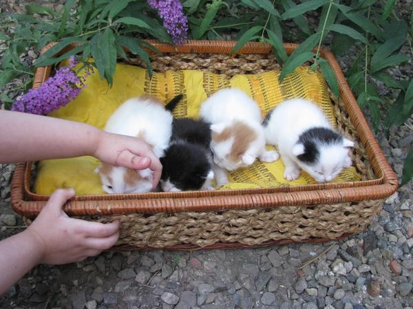 Наше кошачье пополнение)