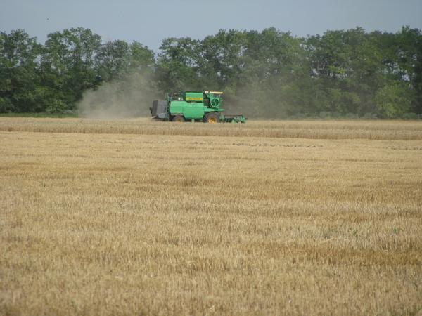 Уборка зерновых!!!