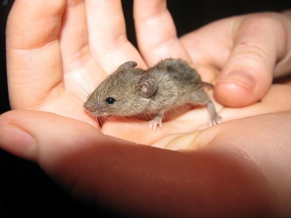Пойманный в бутылку мышонок