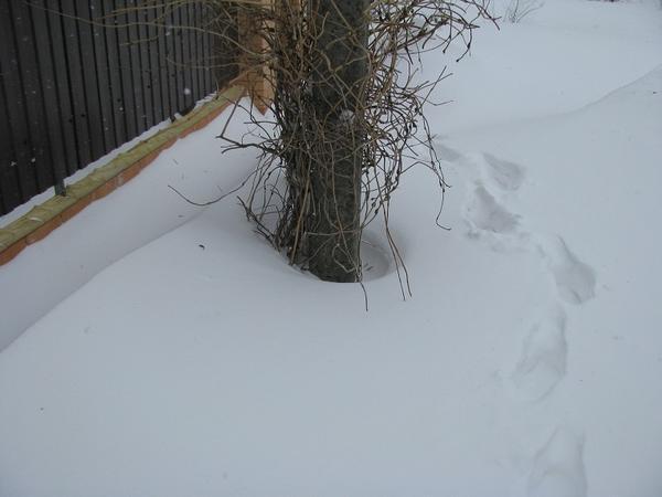 Вокруг столба снега нет