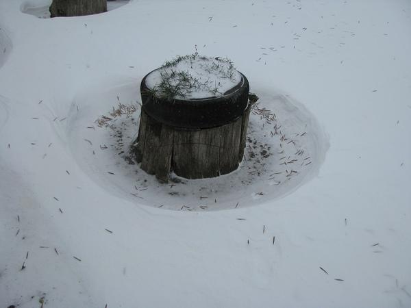 Заговоренный от снега пень