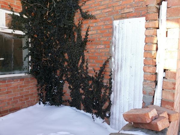 Дверь соединит прихожую и зимний сад