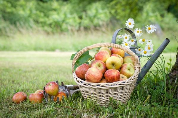 Август щедро одаривает трудолюбивых дачников