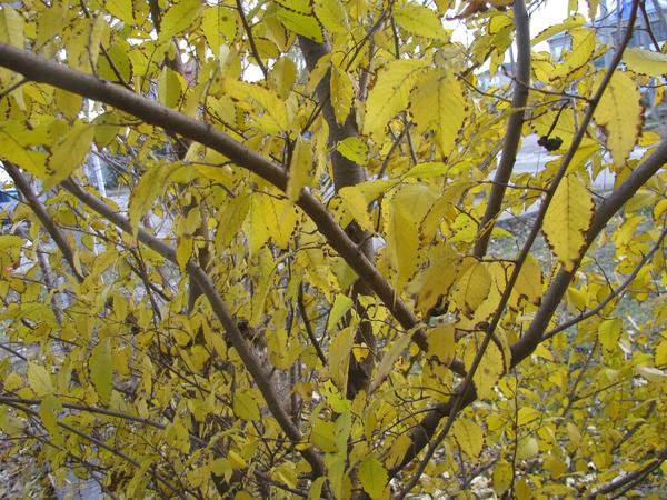 За одну ночь листва стала золотой