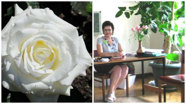 Роза сорт Memoire bdzhilka.in.ua и я встречаю участников научной конференции, к которой уже изданы научные труды