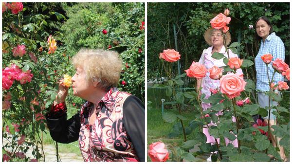 Зинаида Константиновна Клименко с розами