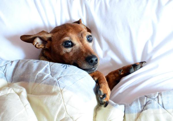 У этой собаки хорошее настроение - ее любят