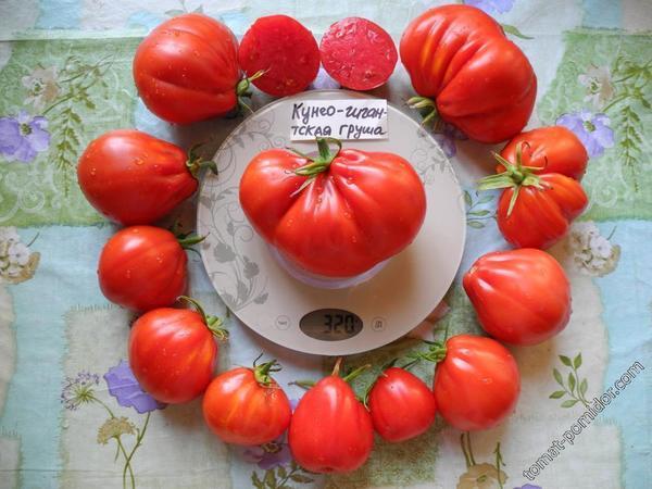 Томат сорт 'Cuneo Giant Pear' фото сайта www.tomat-pomidor.com