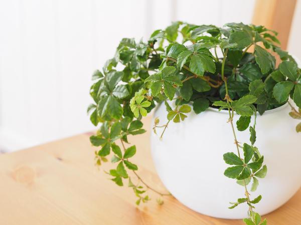 Из горшка такой формы невозможно извлечь растение, не нарушив земляной ком