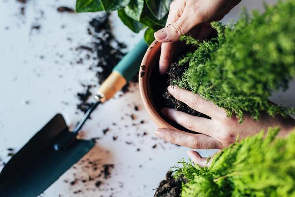 Пустоты между земляным комом и стенками емкости заполняем свежей почвосмесью