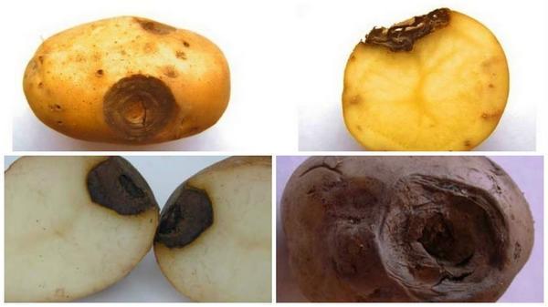 Фомоз. Фотография с сайта www.kartofel.org