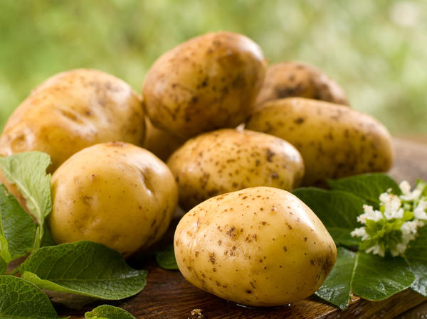 Не позволяйте парше хозяйничать на картофельных грядках