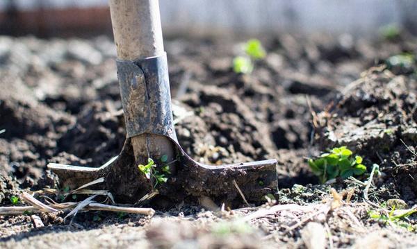 Почву под посадку помидор в открытый грунт необходимо готовить еще с осени, фото с сайта greenhobby.ru
