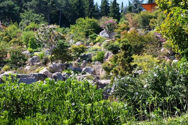 Основа рокария - древесные растения