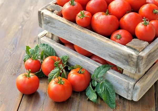 Ткачев рассказал о поставках турецких помидоров в Россию