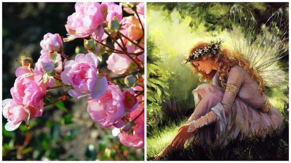 Полиантовая роза сорт The Fairy, фото с сайта Ботаничка.ru и фея, фото с сайта othereal.ru