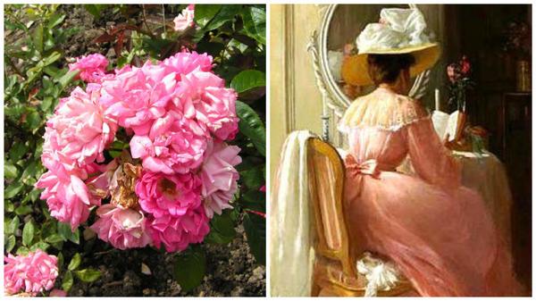 Полиантовая роза сорт Lady Reading, фото с сайта sadogorodsad.ru и читающая леди, фото с сайта Pinterest