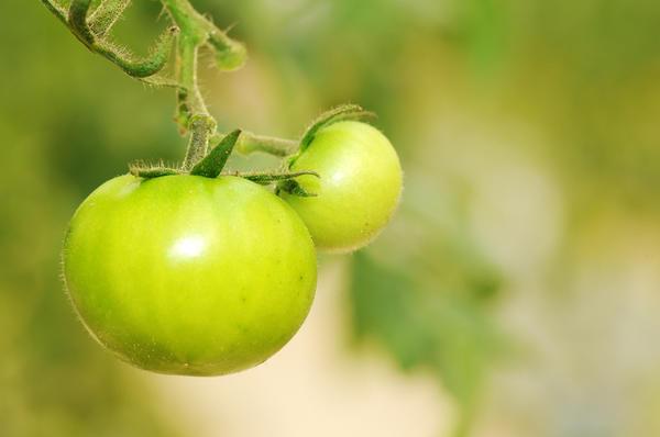Томат сорт Изумрудное яблоко