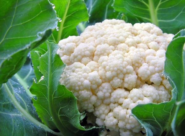 Цветная капуста - полезный диетический гипоаллергенный овощ