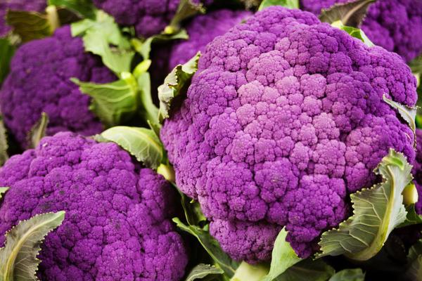 Цветная капуста сорт Пурпурная