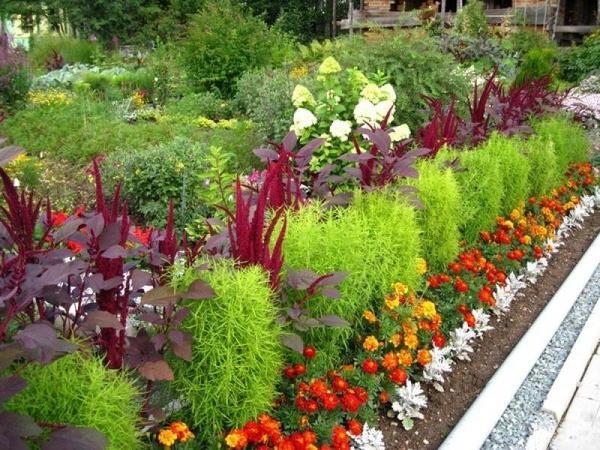 При посадке кохии между растениями выдерживайте расстояние не менее 30 см. Фото с сайта static.wixstatic.com