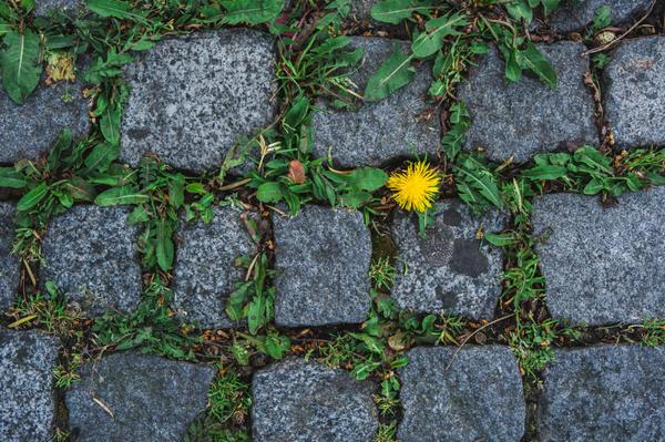 Гербициды помогут избавиться от сорной растительности между плитками