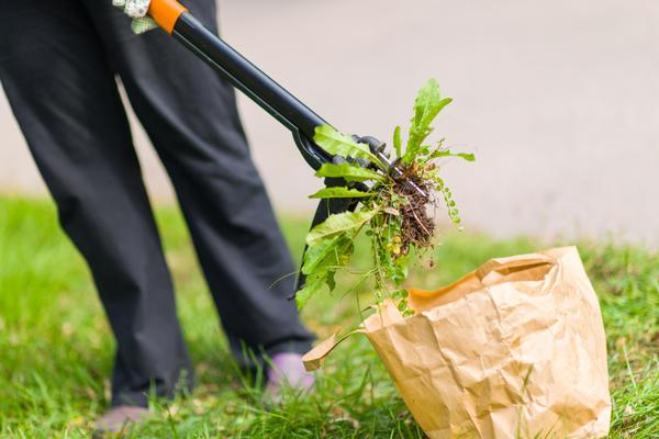 С сорняками можно бороться и без применения гербицидов