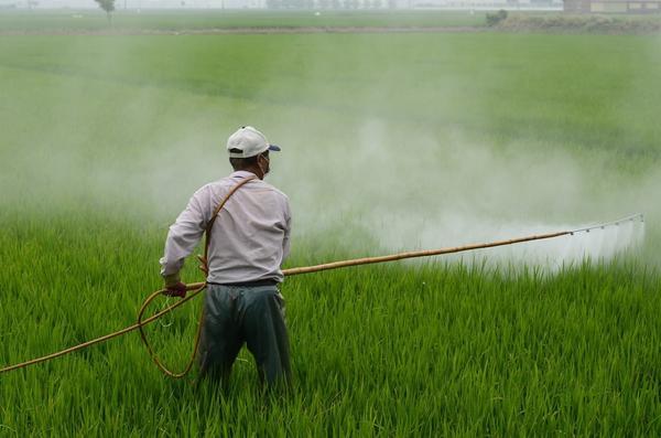 Обработка полей от сорняков. Да, есть и такие гербициды, у них выборочное действие. Фото с сайта cienciatoday.com