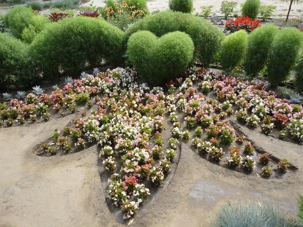 15 цветочных культур, которые нужно посеять на рассаду в апреле