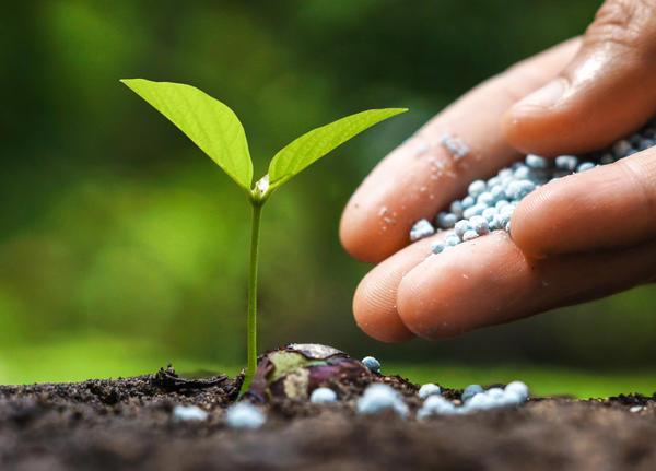 В фосфоре нуждаются все растения