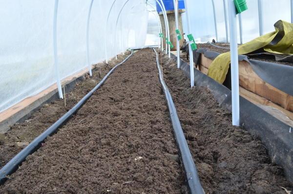 По центру высажу высокорослые томаты. Фото автора