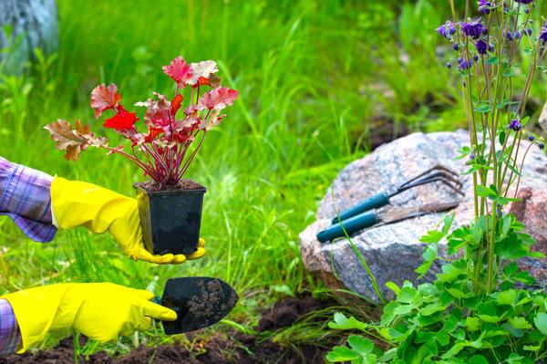 Почва на клумбе должна быть плодородной