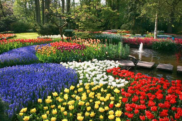Бордюрные цветы и растения многолетники: фото в каталоге и