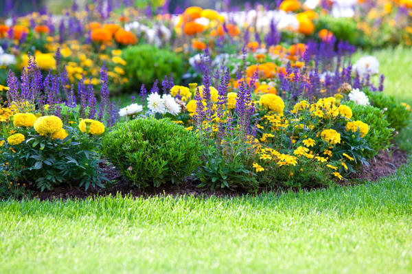 Цветы делают нашу жизнь ярче