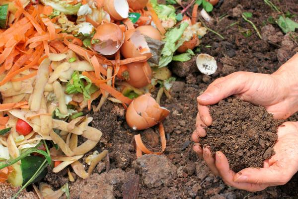 Правильно приготовленный компост - ценное удобрение