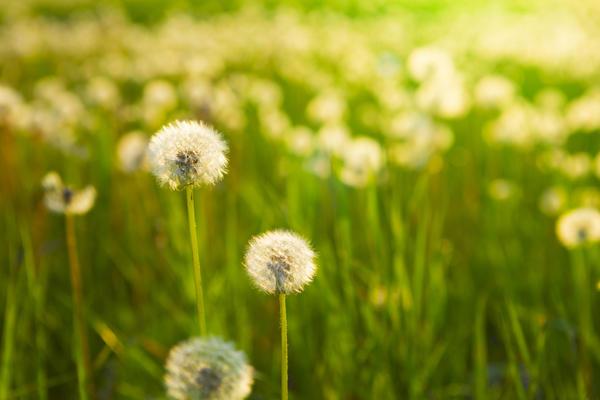 Сорные травы с семенами закладывать в компост нельзя
