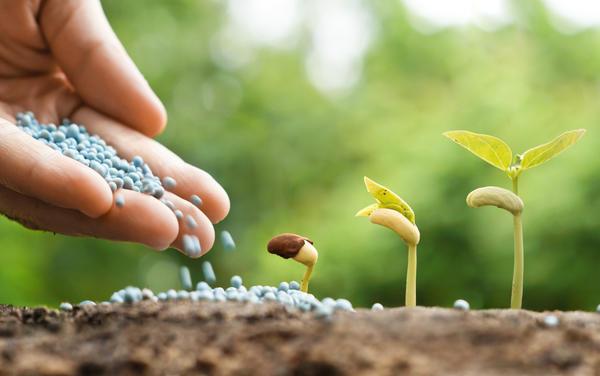 Азотные удобрения способствуют развитию надземной части растений