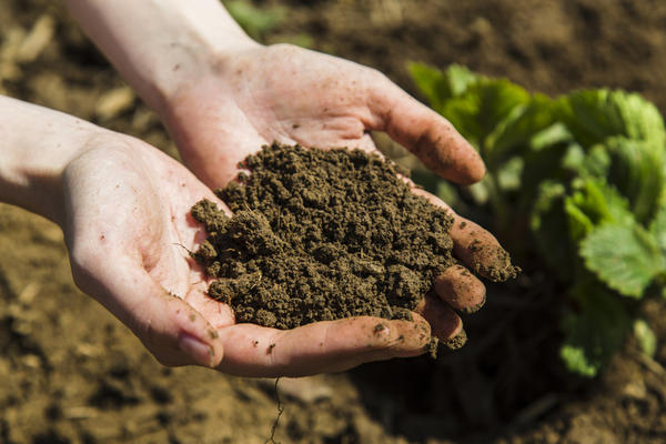 Органические удобрения - ценная подкормка для растений