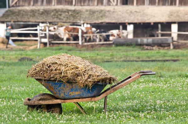 Навоз по праву считается лучшим органическим удобрением