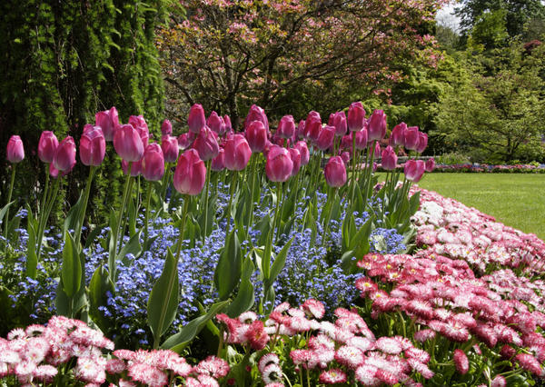 Высокорослые цветы высаживайте на заднем плане, низкорослые - на переднем