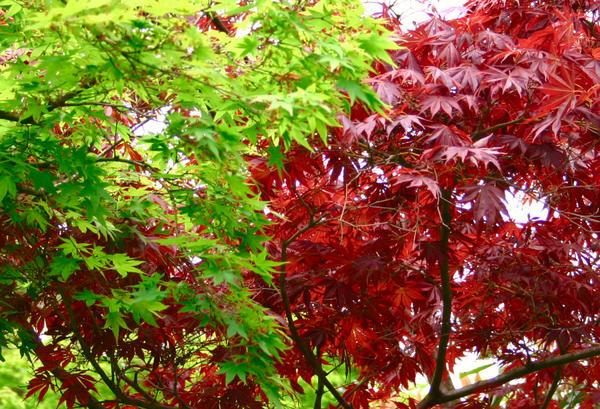 Контраст красного и зеленого, фото автора