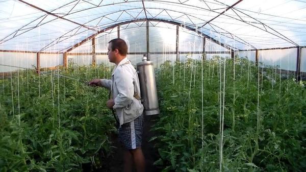 Обработка растений в теплице. Фото с сайта fermilon.ru