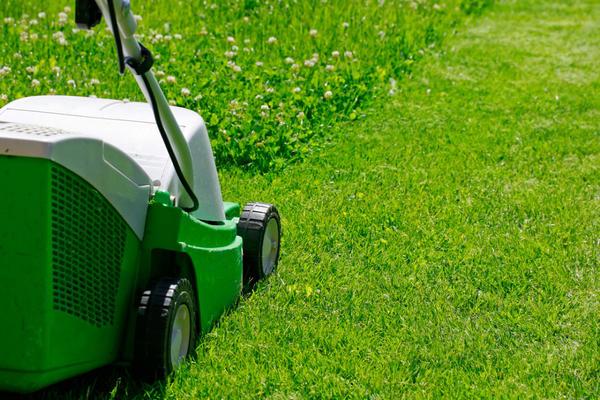 Для стрижки газона из клевера потребуется газонокосилка с контейнером. Фото с сайта stridex.by