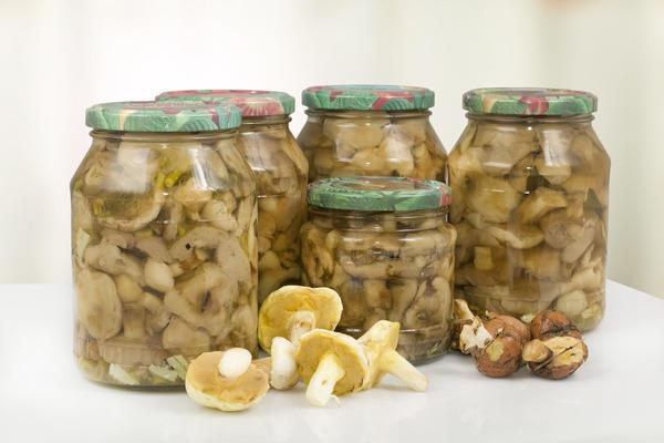 Холодная засолка грибов