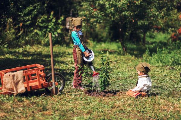 После пересадки саженцы плодовых культур необходимо поливать в течение двух лет