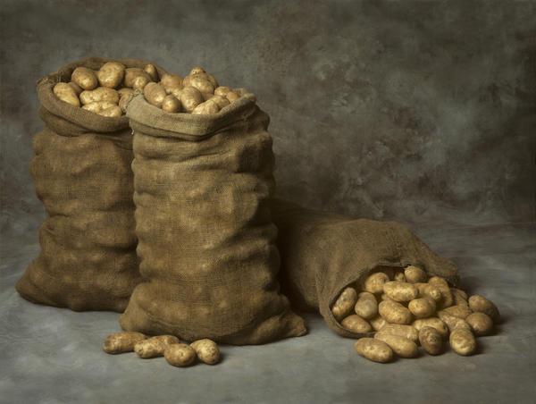 Вся информация о том как сохранить урожай картофеля до весны без потерь